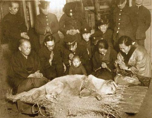 Last picture of Hachiko